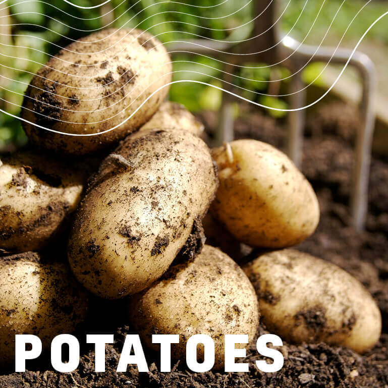 Afrikelp Potatoes