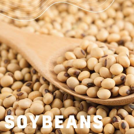 Afrikelp Soybeans