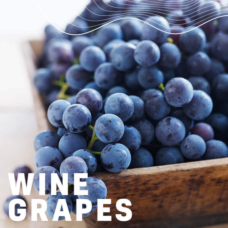 Afrikelp Wine Grapes
