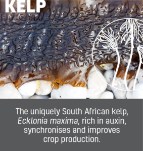 Afrikelp Benefit Tiles